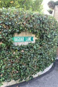 Jaguar Lane